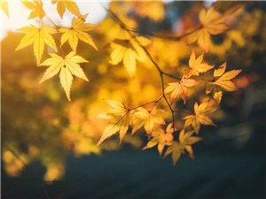 """入秋了,说不清的""""疲惫感""""该如何解除?"""