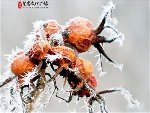 【绿洲・望嵩文化广场】霜降