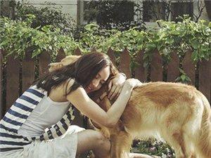 【调查】如果怀孕了你还会养你的宠物吗?