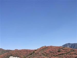 【AA�s伴】:11月2日山西太�O�X�p�t�~�s伴(明天��r出�l)