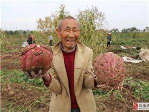红芋丰收农民乐
