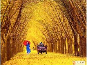 【AA�s伴】:11月9-10日穿越邳州�y杏�r光隧道(明天��r出�l)