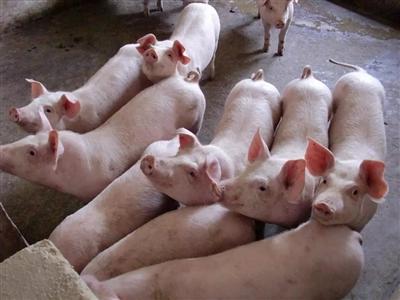 寻乌猪肉啥时候降价?年前涨or跌?官方回应来了…