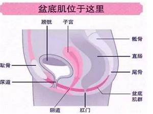 盆底肌功能康复 让您摆脱尿失禁困扰
