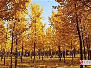 风卷黄叶又一秋
