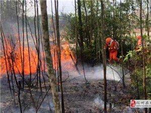 化州应急救援大队全体森林消防队员进行灭火救灾