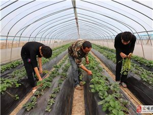 休闲农业助脱贫