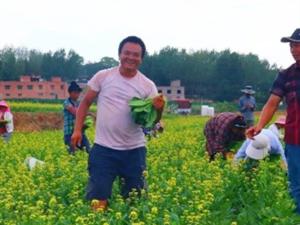 河南宜阳:张红章的菜心创业记