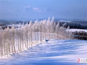 立冬丨在蒹葭�n�n里,感知四季