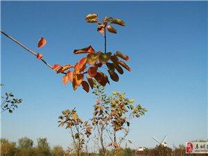 秋风萧瑟,层林尽染,阜城湖公园色彩斑斓