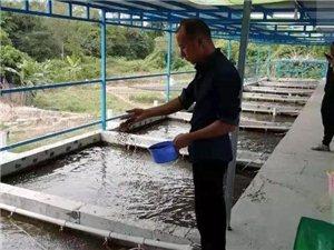 化州江湖这条村65户贫困户全部脱贫!怎么做到的?