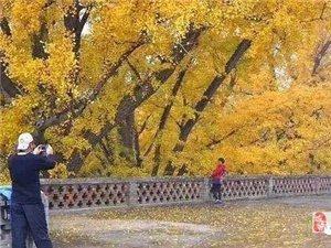 【AA�s伴】:11月16日千年古�x白云寺➕云�_冰菊(明天��r出�l)