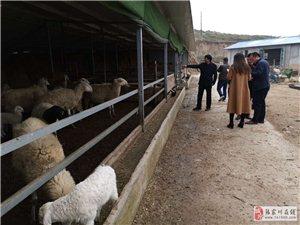 村里来了羊专家