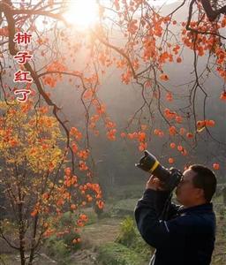 城固摄影师镜头下的美景:《柿子红了》
