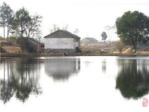 新渡�新城村:挖塘蓄水抗旱