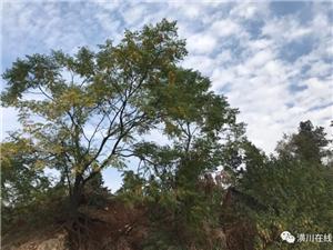 《行走》第1期:海拔286.8米,双柳洪山寨竟是潢川最高峰!