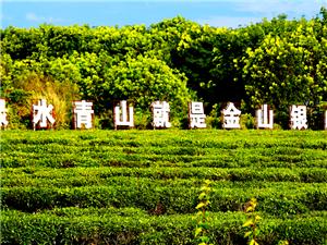 """白沙电商助力茶产业发展 """"互联网+茶""""成效凸显"""