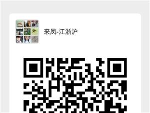 在上海的来凤人微信群