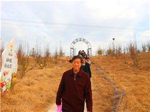 金寨县的黄金梨
