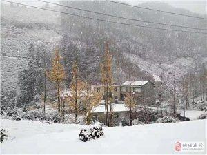 11月27日桐城�@里下雪了��!真大...