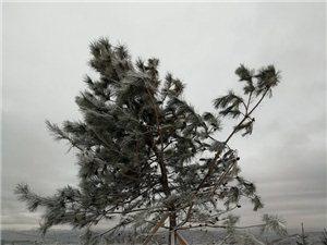 """冬月的一场大雪让张家川山川大地""""漂白"""""""