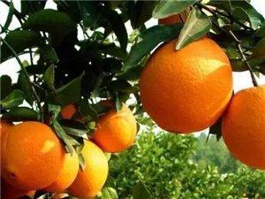 大量收购赣南脐橙百香果,帮忙推荐一下