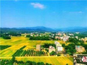 喜讯!化州这个镇入选广东森林小镇!