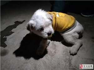 谁家小狗在泰和馨城丢了,主人认领一下