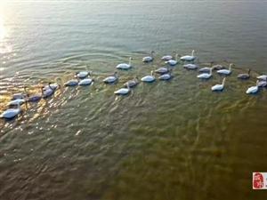 冬天的宿鸭湖,美爆了的金色天鹅湖