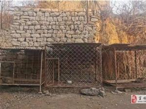 河北女童遇大狗袭击身亡,家属获赔50万元双方私了