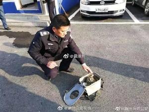 猫头鹰:有困难找警察蜀黍