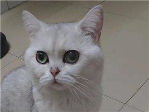 网友求助:寻找心爱的猫咪