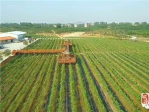 厉害!高州有农民专业合作社1187家,年销售农产品总值超12亿元我市自