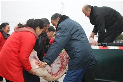 爱心企业家陈烈、陈阿县两兄弟为问安福利院老人送去过年猪肉