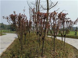 协兴园区完满完成2019年山水林田湖草生态保护修复工作任务