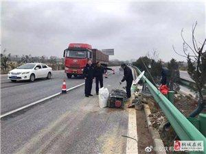 桐城交警队在行动!深入206国道和231省道检查督导!