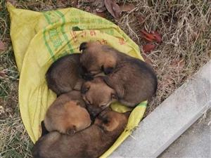 清水湾门口一窝被遗弃的小狗,有没有好心人领养的?