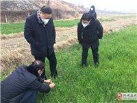 桐城:专家指导组对接大户服务春耕备耕