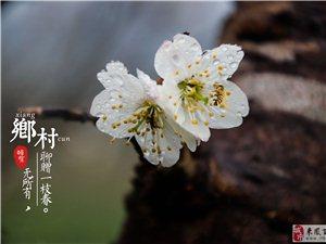 乡村无所有,聊赠一枝春。