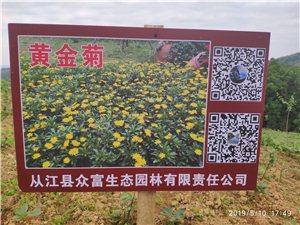 招聘贵州从江县大洞村花卉种植劳动管理人员