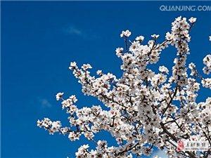 暖心社区人   剪出一片春