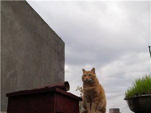 寻一只黄色橘猫