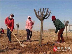 """滨州博兴:战""""疫""""情 抓造林 全力创建国家森林城市"""