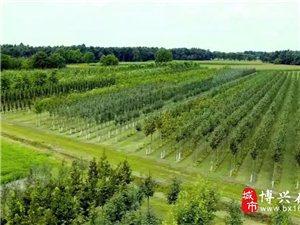 博兴京博:1500余人参加,植树10000余棵!