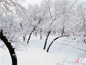 三月九日叶柏寿雾凇