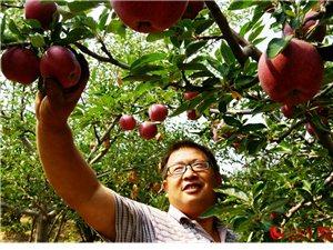 隰州红苹果【10斤装】
