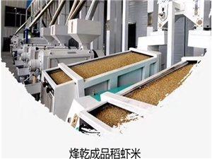 烽乾稻�r米加工成品