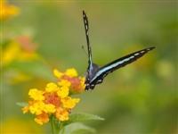 螳螂捕蝉,黄雀在后!满满的夏天的味道……
