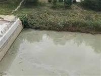 香驰喜园东面的小河,这是放的什么水???
