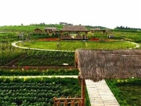 潢川这4家家庭农场被省里点名表扬,快来瞅瞅你去过几家?